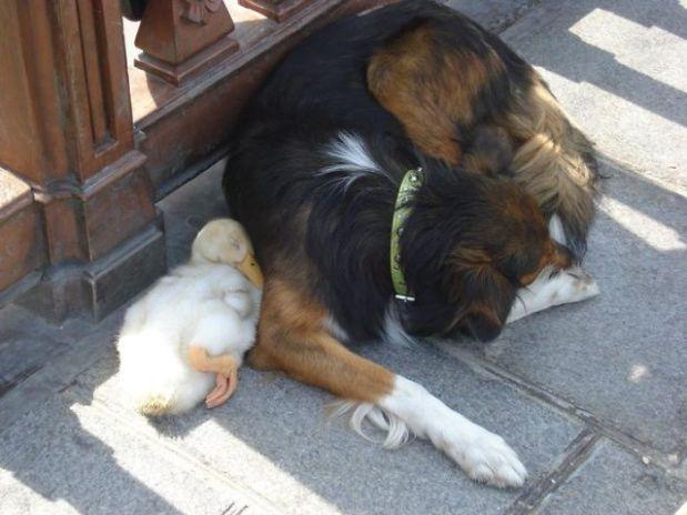 unusual-animal-friendship-50__700