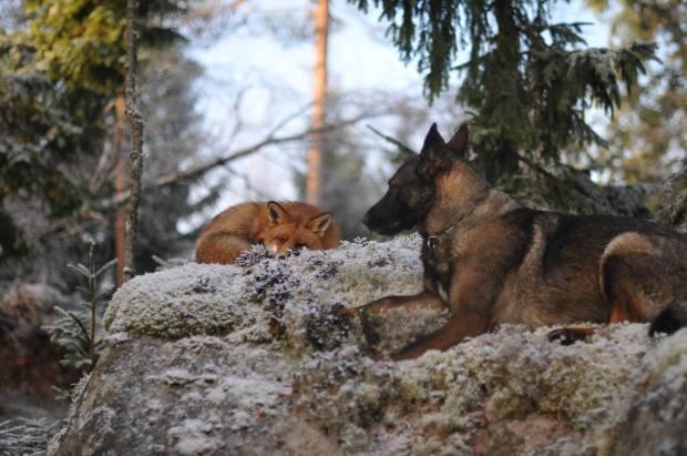 unusual-animal-friendship-70