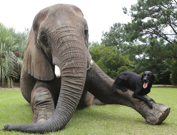 unusual-animal-friendship-71