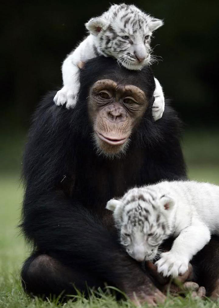 unusual-animal-friendship-78