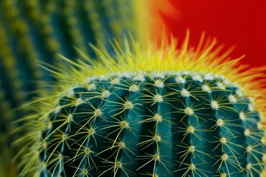 stockvault-cactus-halo141308